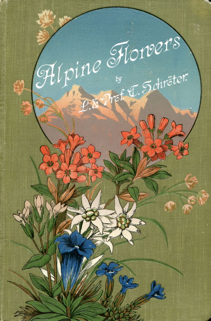 'Coloured vade-mecum to the Alpine flora' by L. Schröter and C. Schröter. A. Raustein, Zurich, 191?