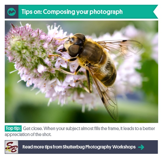 Photography Tips: Next up in our series is Bridget Withers from Shutterbugs Photography Tuition, giving us her handy hints on photograph composition - http://moonfruit.tumblr.com/post/37266590102/more-moonfruit-photographers-tips-bridget
