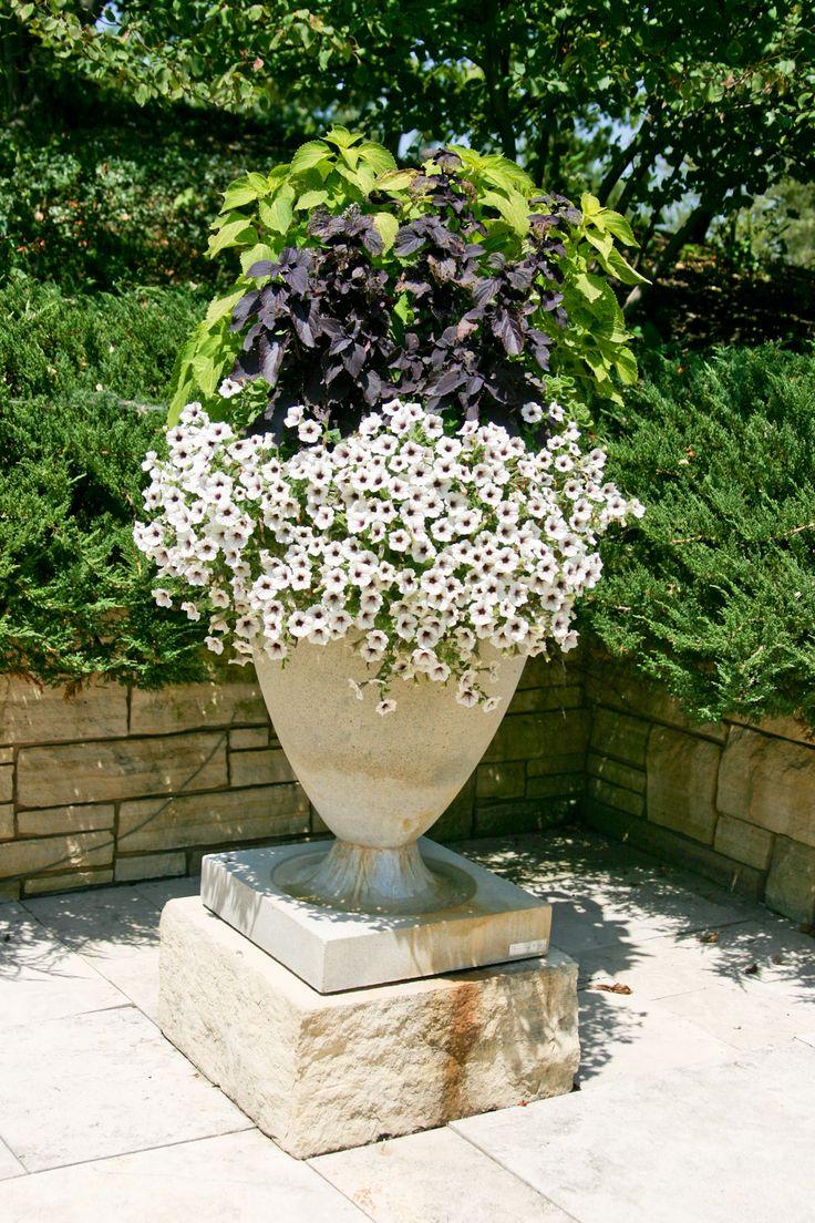 37 Best Potted Plants Images On Pinterest Pot Plants Potted