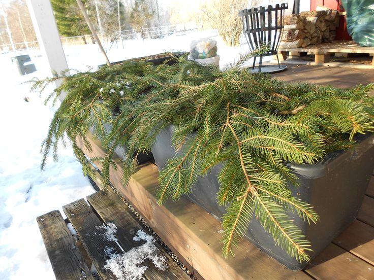 Fixa ett snabb och bra julpynt på altanen. Och bli av med några hinkar Bokashi på köpet! Du behöver murbruksbaljor (finns på typ Biltema). Lekakulor, gammal skräpjord, några hinkar Bokashi och en …