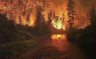 Skovbrand - Wikipedia, den frie encyklopædi