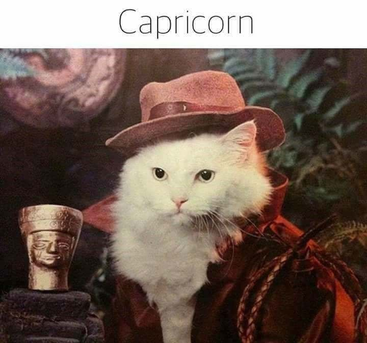 These Cats Representing Horoscopes Are Hilarious I Can Has Cheezburger Cats Cat Memes Animals