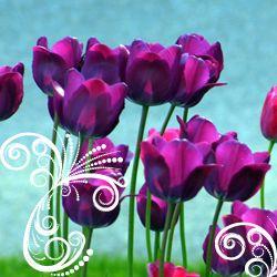 E o zi minunata... e ziua ta! La multi ani de Sf. Constantin si Elena! http://ofelicitare.ro/felicitari-de-sf-constantin-si-elena/e-ziua-ta-738.html