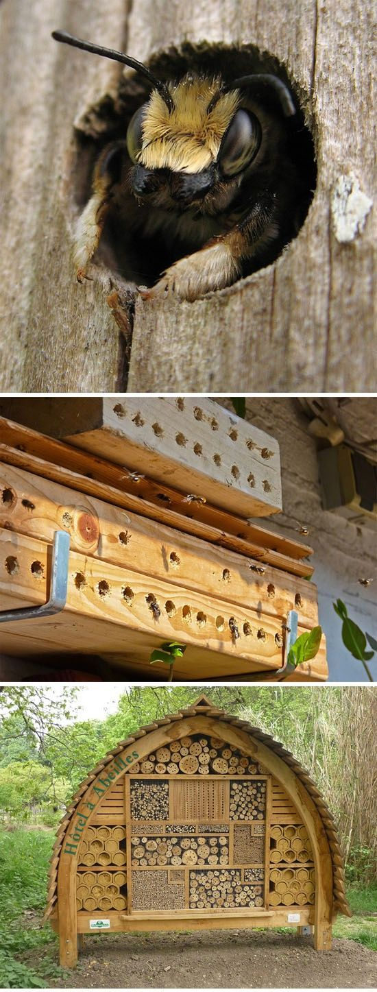best abeilles images by sheryl moll on pinterest bees
