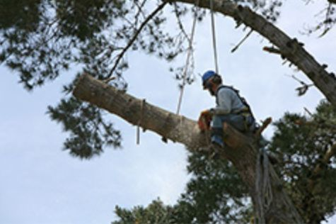 Dayton, Ohio, Tree Care And Maintenance