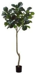 http://www.houzz.com/photos/5074290/7-foot-Fiddle-Leaf-Fig-Silk-Tree-with-Pot-traditional-artificial-flowers-other-metro