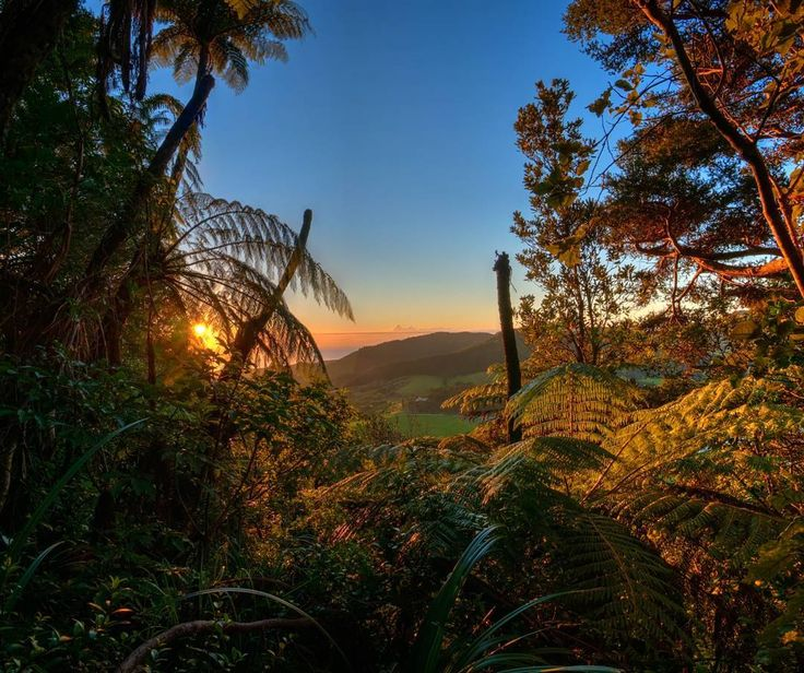 To celebrate the clocks going back here in New Zealand, giving us an extra hour of morning light, here's a sunrise from our explorations around Whangarei over the Easter weekend.