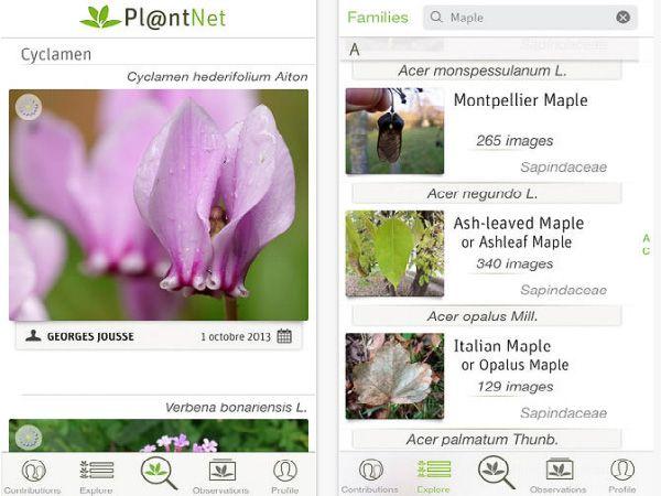 スマホで撮影した植物が瞬時にわかる画像検索アプリ「PlantNet」登場の画像