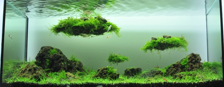 Quot Sky Island Quot Aquatic Obsession Aquarium Planted
