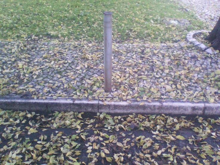 Folhas em todo o lado