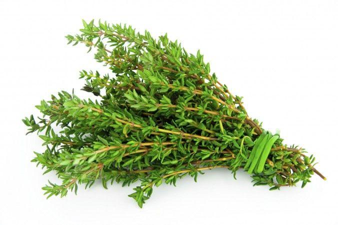 El tomillo ha sido una hierba culinaria favorita durante muchas generaciones; en el pasado, fue la elección preferida en la medicina folklórica europea par