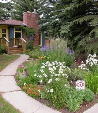 1000 images about grasses edging border plants for No maintenance front yard