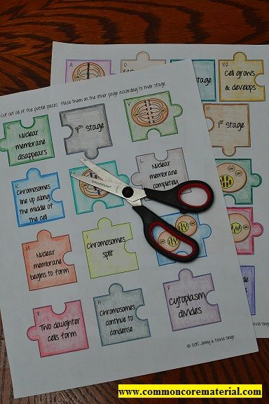 Common Core Material: Mitosis Puzzle Activity