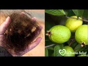 ¡INCREIBLE! Con Solo Utilizar Estas Hojas Podrás Acabar Con Las Arrugas,Acné,Manchas Oscuras Y Alergias En La Piel De Forma Definitiva - Zona Viral