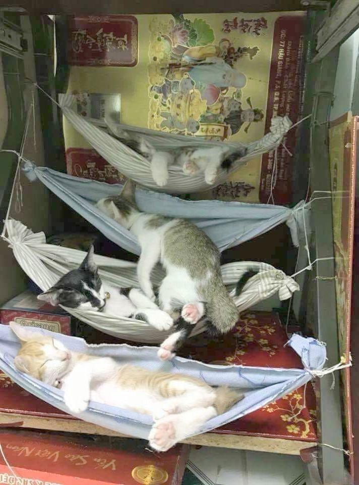 Kittens For Adoption Phoenix Az her Siamese Kittens For