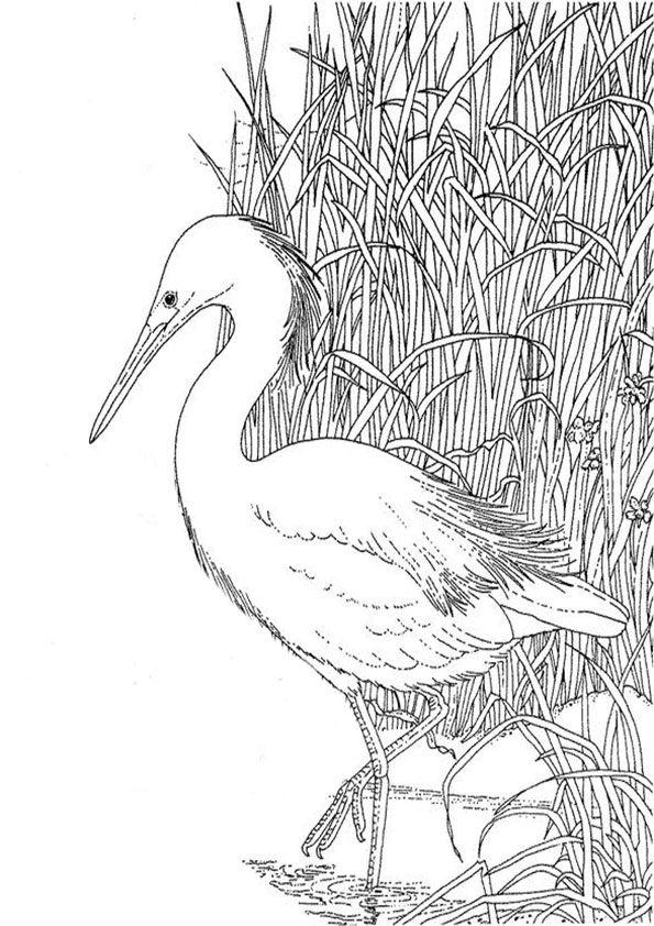 tiere-9 | vogel malvorlagen, ausmalbilder tiere, ausmalbilder