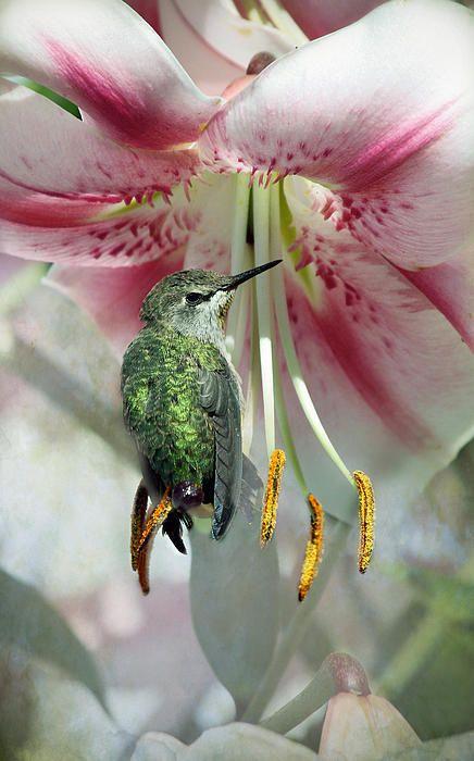 Hummingbird resting on flower - By Lynne Mcclure
