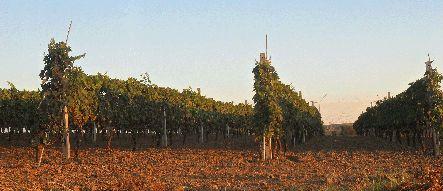 Regione Puglia e vino  #winelover