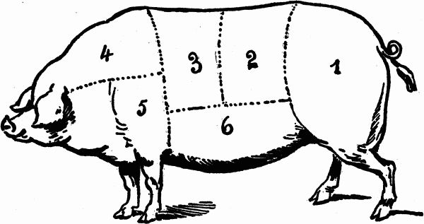 Lamb likewise Pig Butcher Drawing further Beef 20chart in addition Post skeleton Diagram Without Labels 172722 moreover 86360 meat Of Cow. on pig meat cuts diagram