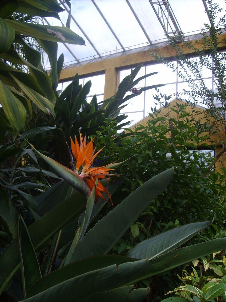Flor en invernadero