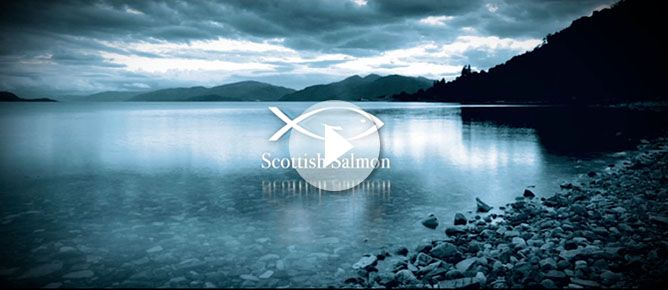 Home - Scottish Salmon Producers' OrganisationScottish Salmon Producers' Organisation - Discover Scottish Salmon