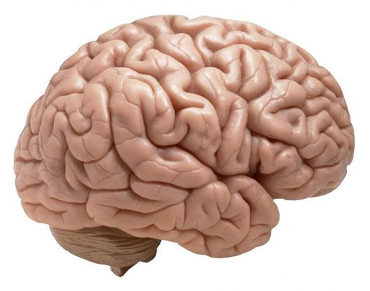 Copper Influx Key to Brain Cell Development