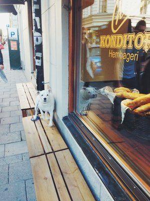 Chic Konditori, Mariatorget. Chokladboll, dammsugara and even Princess Cake...All the Swedish classics:)