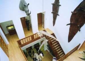 Natuurhistorisch Museum Rotterdam In musea area of rotterdam