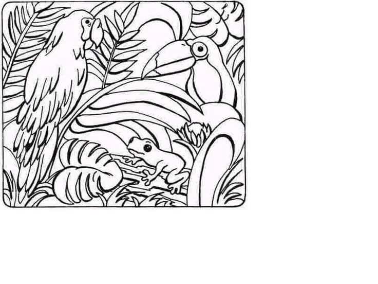 tropical rainforest coloring pages