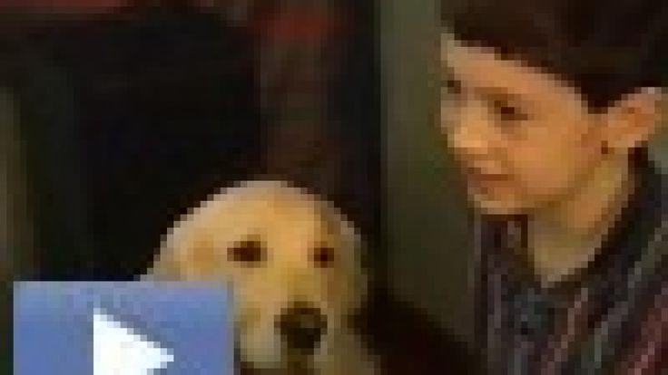 """Dale (8 år) har autisme.  Familien bor i Skottland. Moren skrev en bok om hvordan en hund ved navn Henry forandret familiens liv. Plutselig klarte sønnen å ta et bad, si """"jeg elsker deg"""" og gjøre andre ting som de fleste foreldre tar for gitt.  Du kan se familien i videoen (på engelsk).  Boka er tilgjengelig på svensk under tittelen """"Min vän Henry."""""""