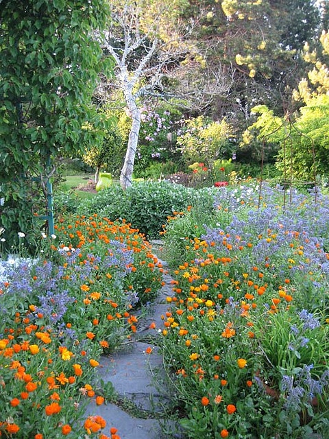 Orange and blue/violet Pathway at Sooke Harbour House, Vancouver Island, B.C. I believe that is borage and calendula, both edible. Sooke is known for their kitchen garden.