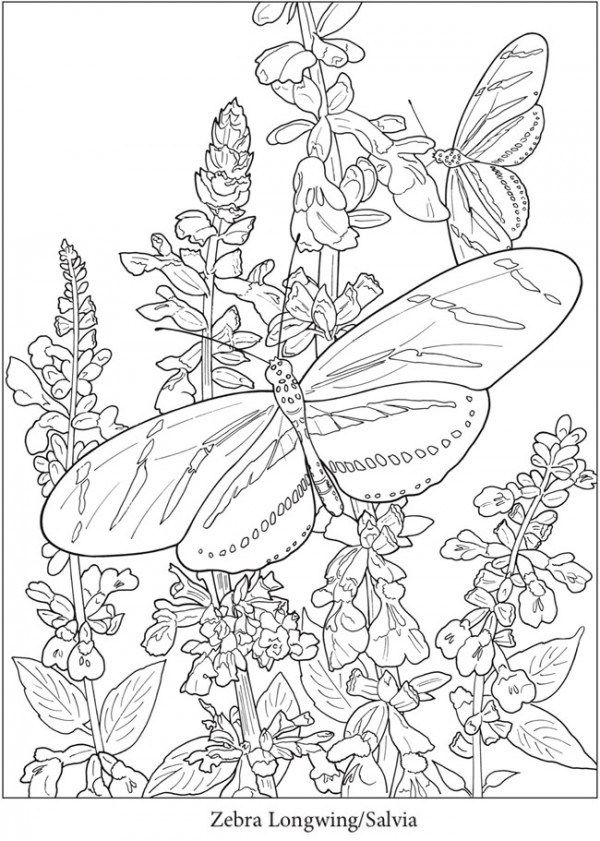 4 Butterfly Coloring Pages Butterfly Coloring Page Coloring Pages Flower Coloring Pages