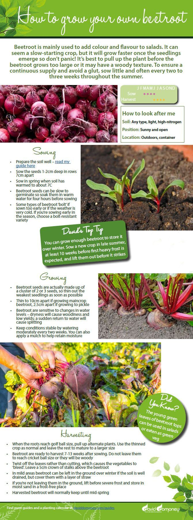 Veg Garden How To Grow Your Own Beetroot David Domoney Veg Garden Organic Gardening Tips Veggie Garden