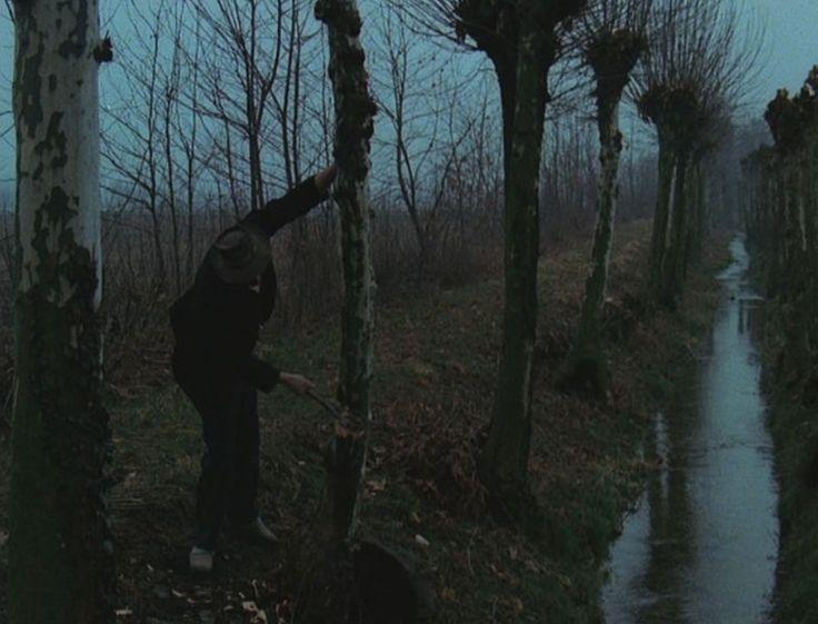 Archivi:L'albero degli Zoccoli El tai de l'albor
