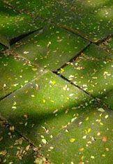 Snel en voordelig groene aanslag verwijderen met schoonmaakazijn. Zie ook andere tips.