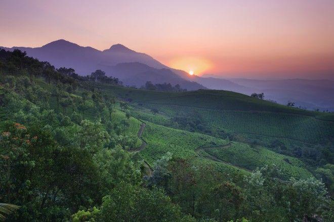 Western Ghats, Indian tea, India