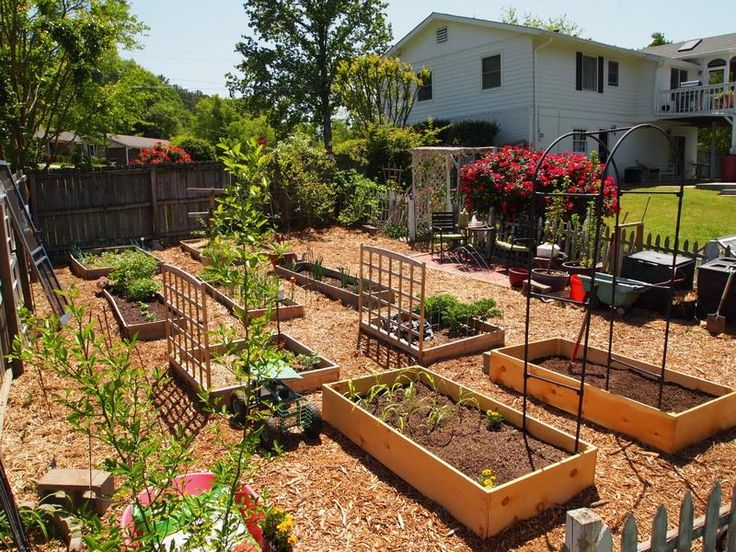 Best 20+ Backyard Vegetable Gardens Ideas On Pinterest | Gardening