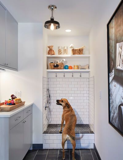 17 best pet dcor designing with pets in mind images on pinterest 5 practical tips for designing a home dog washing station solutioingenieria Images