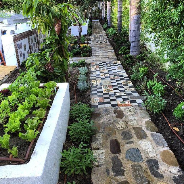 #huerta#orchard#instaporn #jardin #jardines #garden #gardener #gardeners #gardening #gardenlife #gardenlove #guadalmina #gardenfresh #gardendesign #garden_styles #marbella #malaga #andalucia #españa #🌞#🌿#🍠#🍋#🍉🍀🌹🍍🌷🍠🍋🍒🍎🍓🍏🍑🍌🍇🌽🍆🍅🍈🌻#huertaencasa #huertaurbana #huertaorganica #huertaecologica