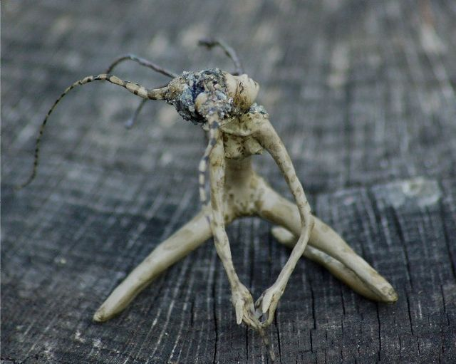 fairies carved from roots