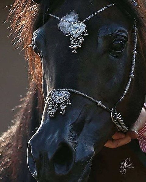 Very pretty horse face, gorgeous halter.