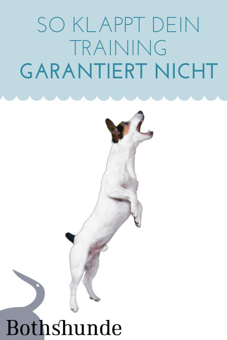 So Klappt Dein Hundetraining Garantiert Nicht Die Reinste Form Des Wahnsinns Hundchen Training Hundetraining Hunde