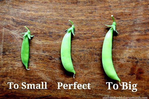 How to Grow Peas (start to finish!) - love the recipes, too!