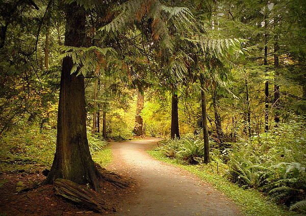 Forest Trail by photographer Brian Chase. Autumn walk through Central Park, Burnaby,BC