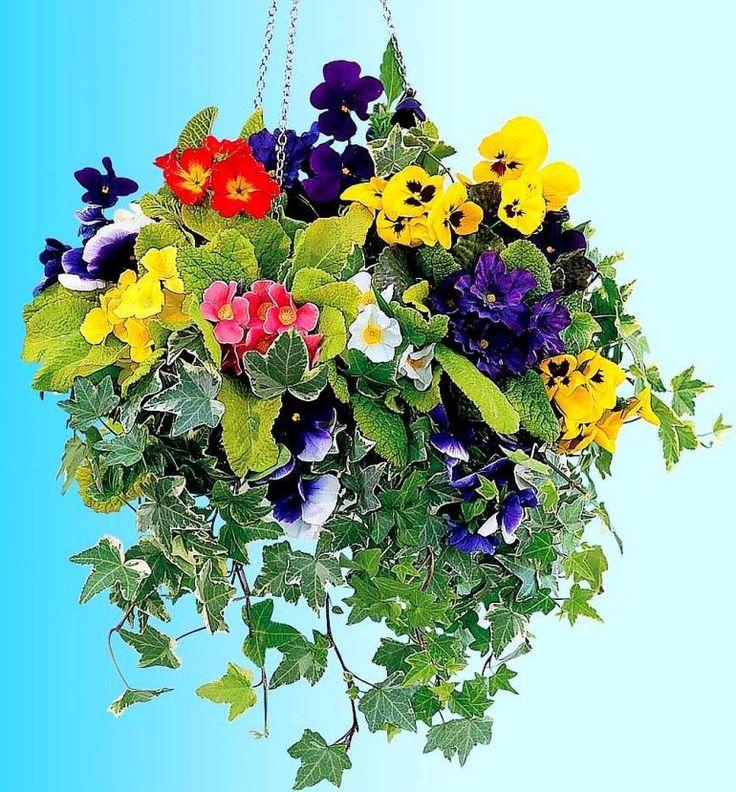 adelaparvu.com despre jardiniere cu flori multicolore, Text Carli Marian (8)