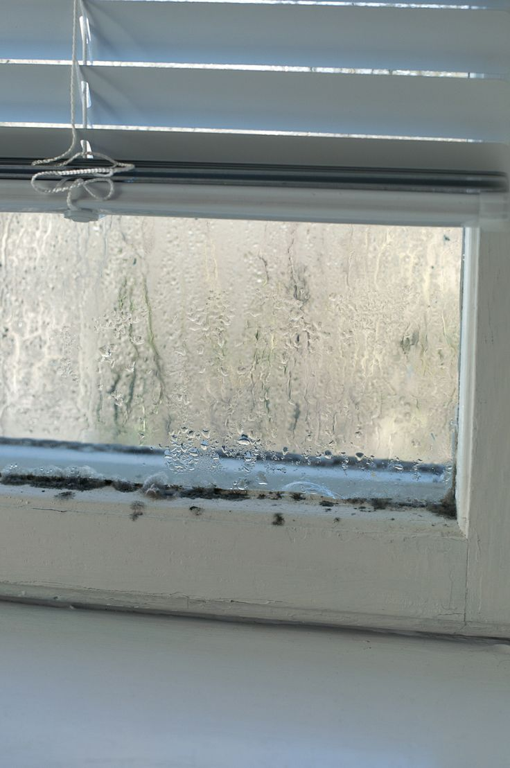 How to clean mold off walls - Do You Have Condensation On The Inside Of Your Windows Here S What Causes The Problem Windows Here Smold On Windowshow To Clean