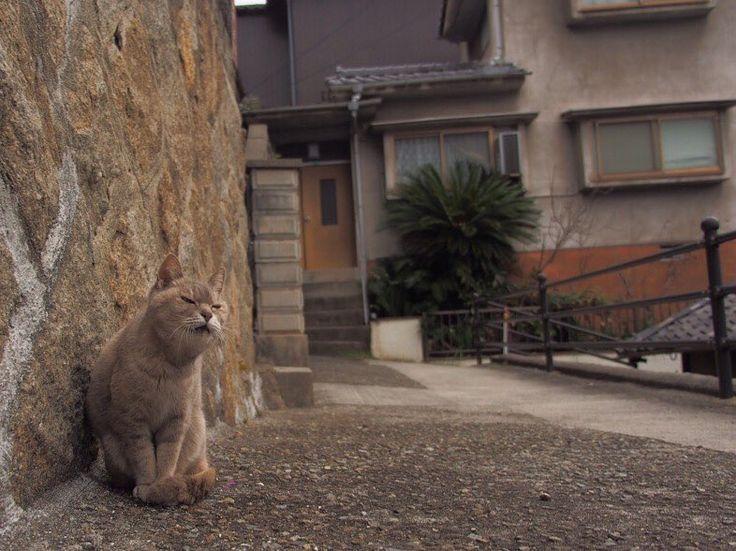 #takamatsu #kagawa #japan  #solo #instagood  #japantravel #happy #fun #look #photography #portrait #instajapan #instadaily #ポートレート #japantrip #natgeo #amazing #photo_shorttrip #awesome #cool  #wonderful_places #cat #nekoclub_jpn