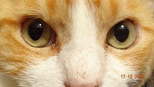 Área Restrita - Pataapata - Identidade digital para seu melhor amigo - cães - gatos - portal para proteção do pet - cachorros - pets - plin - rastreador de cães e gatos - rede de serviços para - medalha de identificação para animais de estimação - pata a pata - agentes
