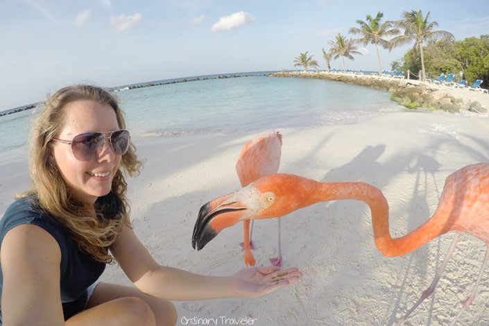From spending the day with flamingos to snorkeling with sea life, here are ten things you won't want to miss on your next trip to Aruba.