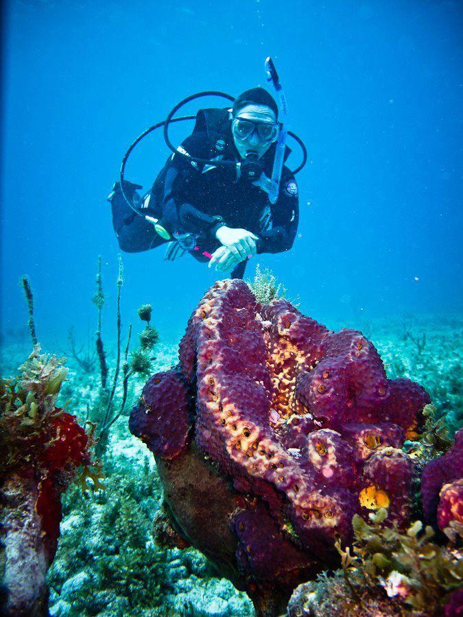 Mergulhar em Cancun, Riviera Maya e Cozumel | Passeios em Cancun